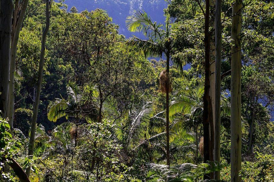 Scatto mozzafiato nella foresta pluviale australiana
